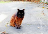 Mew Orleans (kirstiecat) Tags: cat feline kitty meworleans neworleans caturday streetcat gato chat chatte blackcat
