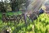 rays of sunshine over farm machinery (teammcdyre) Tags: farm machinery plough countryside fields summer rustic sunflare thornton england uk sunrays rays sunshine