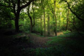Ravelston Woods