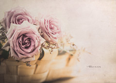 Roses (Ro Cafe) Tags: roses stilllife flowers basket naturallight textured nikkormicro105f28 nikond600