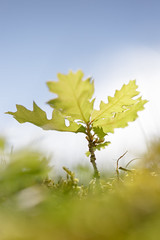 jeune pousse (Patatitphoto) Tags: lauragais flore