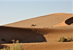 Magical Places and Things - Namibia - Sossusvlei (2) (The Spirit of the World ( On and Off)) Tags: sossusvlei namibia africa southernafrica dunes sanddunes sand old desert wildlife nature vegetation hoofprints curves patterns naturesfinest