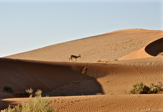 Magical Places and Things - Namibia - Sossusvlei (2)