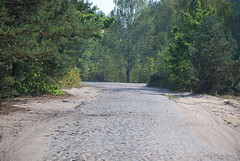Волинський ліс Лісова дорога InterNetri Ukraine 1640637181