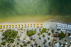 Pernambuco (ACNegri) Tags: pernambuco nordeste nordestino brasil brazil brasileiro brazilian brasileño brazilians brasileiros brazilianbeauty natureza nature naturaleza natural praia praiabeleza beach drone aerea aereal ferias travel trip