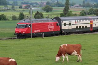 SBB Lokomotive Re 460 030 - 0 mit Taufname Säntis im neuen Design mit Metall SBB Signet an der Front ( Hersteller SLM Nr. 5507 - ABB - IB 1992 ) mit Intercity IC Zug unterwegs zwischen Gümligen und Rubigen bei Bern im Kanton Bern der Schweiz