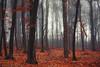 nifelheim (Alexandru Jitaru) Tags: treetrunk autumn woods birchtree maple boulevard birch tree beech forest deciduoustree mapletree