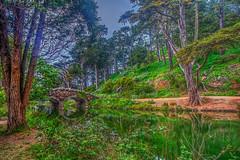 "Fairyland Bridge (Michael F. Nyiri) Tags: stonebridge sanfrancisco goldengatepark flora green trees nature ""canonflickraward"