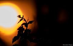Into the light. (Kerstin Winters Photography) Tags: nikondigital nikondsl flickr albuquerque newmexico colors sonnenuntergang sun liebegeht shadows sunset silhouette