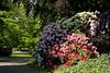 Mainz, Stadtpark, Rhododendron (HEN-Magonza) Tags: mainz rheinlandpfalz rhinelandpalatinate deutschland germany stadtpark rhododendron municipalpark
