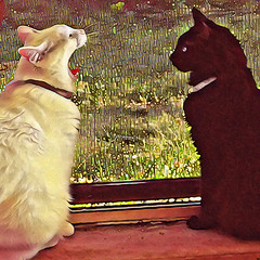 """""""No, I don't see anything wrong. Your tongue looks fine."""" (amarcord108) Tags: amarcord108 cats oslo sophie"""