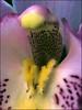 (Cliff Michaels) Tags: iphone8 photoshop pse9 flowers kroger macro