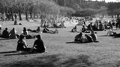 Spring Evening in the Meadows 03 (byronv2) Tags: meadows spring sunny sunshine sunlight peoplewatching candid street sitting seated picnic sunbathing edinburgh edimbourg scotland blackandwhite blackwhite bw monochrome