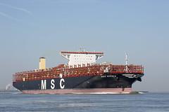 MSC RIFAYA (angelo vlassenrood) Tags: ship vessel nederland netherlands photo shoot shot photoshot picture westerschelde boot schip canon angelo griete cargo container mscrifaya