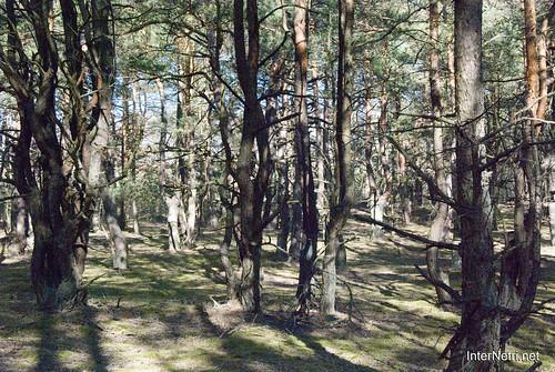 Волинський ліс InterNetri Ukraine 0630644687