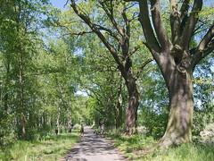 Stawy Milickie (Olgierd Pstrykotwórca) Tags: stawymilickie las przyroda forest water woda