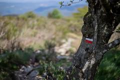 GR7, Caroux, Lamalou les Bains (valerian.guillot) Tags: ze canon planart1450
