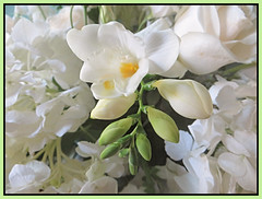 Freesia White (bigbrowneyez) Tags: bouquet freesia lovely white blossoms flowers fiori pretty bright roses hydrangea fresh wedding event party gorgeous beautiful delicate romantic romance elegant striking stunning amazing frame cornice may fancy bello bellissimo fleurs precious freesiawhite nature natura scented perfume