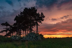 Draycott sunset (alexcalver) Tags: sigma1750mmf28 canon80d clouds sun sunset england uk derby derbyshire draycott