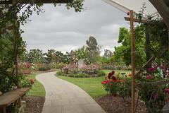 D75_3491 (joezhou2003) Tags: huntington rose garden architecture nikon d750 24120mm vr
