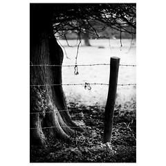 (Silas Slack) Tags: kimberly norfolk uk carletonforehoe wymondham leica m10 elmarit 90mm f28 landscape bw blackandwhite