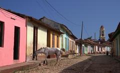 Chroniques cubaines 22 (chriskatsie) Tags: animal cuba linda trinidad cheval horse maison house street rue
