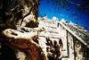 Chichen Itza (cranjam) Tags: lomo lca lomography film slide xpro expired kodak elitechrome100 mexico messico yucatán chichenitza maya ruins rovine unesco worldheritagesite archaeologicalsite sitoarcheologico piramide pyramid iguana