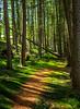 I Love Tree's (Ian Emerson) Tags: woodland trees fallen path outdoor canon hiking
