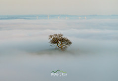 Emanation (http://www.richardfoxphotography.com) Tags: raddonhills inversion raddon fog foggy mist misty tree windturbines crediton temperatureinversion sunrise outdoors devon