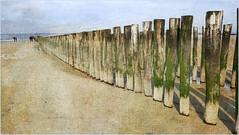 Mer du Nord et plage, Dombourg, Walcheren, Zeelande, Nederland (claude lina) Tags: claudelina paysbas nederland hollande zélande zeeland dombourg walcheren plage beach merdunord noordzee dunes sable