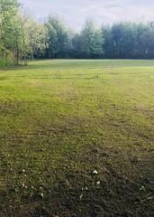 IPO Schutzhund Field in progress (Falon167) Tags: ipo schutzhund field grass