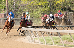 2018 Best Pimlico Racetrack (12) (maskirovka77) Tags: pimlico dirt mare race racehorse threeyearold turf yearling