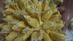 Jackfruit (joegoauk73) Tags: joegoauk goa fruit jackfruit bulbs ponos ponnos rosall soft