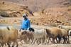 jordan valey (eva.pave) Tags: landscape animal people man sheeps pasture desert road palestine jordan valey