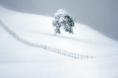 Solo (arbioi) Tags: arbol baztan canon euskalherria eos40d eugi enekorri frio gr12 gr11 paisaje kintoreal okoro urkiaga navarra nafarroa naturaleza nieve quintoreal raquetas snow zagua