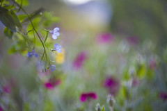 scents of spring (Lamson**NG) Tags: spring flowers floral bokeh lamson color scents fragrance