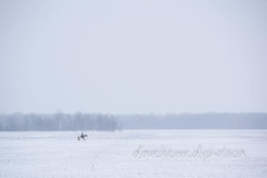 Lone Rider (dcmack) Tags: agriculturefood water fields ontario abstract elmira horse minimalist snow