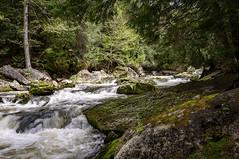 Inglis Falls (garypaakkonen) Tags: canada canadarocks flowersplants garypaakkonen inglisfalls photography waterfall d300s landscape nature nikon ontario spring water