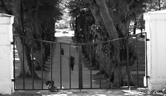 _MG_8190 (Maliol) Tags: gate dog park trees tree people animal summer funny hound norway blackandwhite bw