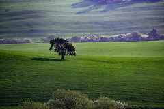 just a brief thought... (Wöwwesch) Tags: landscape soft hills spring green tree shadow