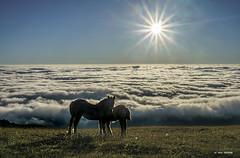 Pareja de pottokitas (Jabi Artaraz) Tags: jartaraz zb euskoflickr pottoka horse caballos potros nature vida natura niebla nubes mar mardenubes