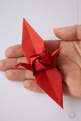 Origami Rose Crane (Judith Magen) Tags: origami rose crane satoshi kamiya