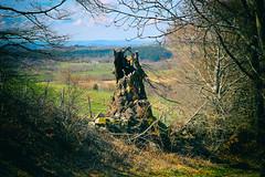 Nature morte, Auvergne (Weblody) Tags: arbre mort centre auvergne superbesse lac pavin chauvet randonnée vivant nature morte souche weblody trogne