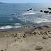 2018-04-22 04-28 Kalifornien 256 Ano Nuevo State Park