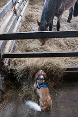 P1250206_edit (The Oldhams) Tags: cornwall donkeys flickadonkeysanctuary