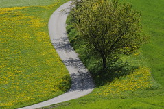 The Way (JohannesMayr) Tags: bern kanton leimiswil switzerland schweiz frühling spring wiese matte löwenzahn blumen bäume tree flower sun sonne weg strasse way street dandelion meadow