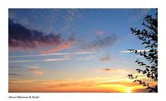 [ Harmonies' meeting ] (Chris Séhenna) Tags: ciel sky cielo nuages clouds nube crépuscule sunset puestadelsol branches ramas méditation meditation meditación prière prayer oración
