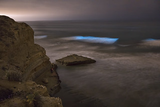 Catching The Bioluminescent Wave