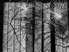 P1000932 (sven804) Tags: panasonicgx9 blackandwhite monochrome bnw urban urbanphotography urbanwales urbanandstreet street streetphotography streetphotographer dream dreampop experimental notabstract abstractnotabstract notreallyabstract aphotographcanneverbeabstract couldbeanalbumcover broken brokenglass noir filmnoir rhylnoir rhyl denbighshire