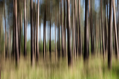 STRAIGHT UP (P.N.F) Tags: trees icm motion